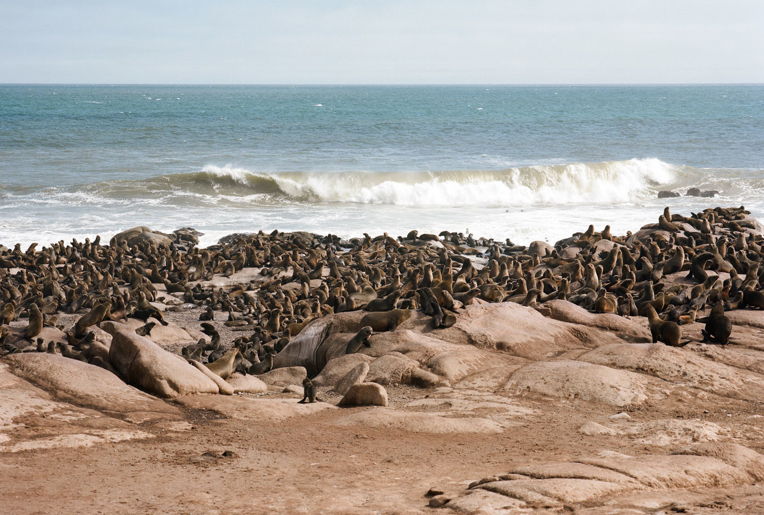 Namibia-Skeleton-Coast-Shipwreck-Lodge-Seals