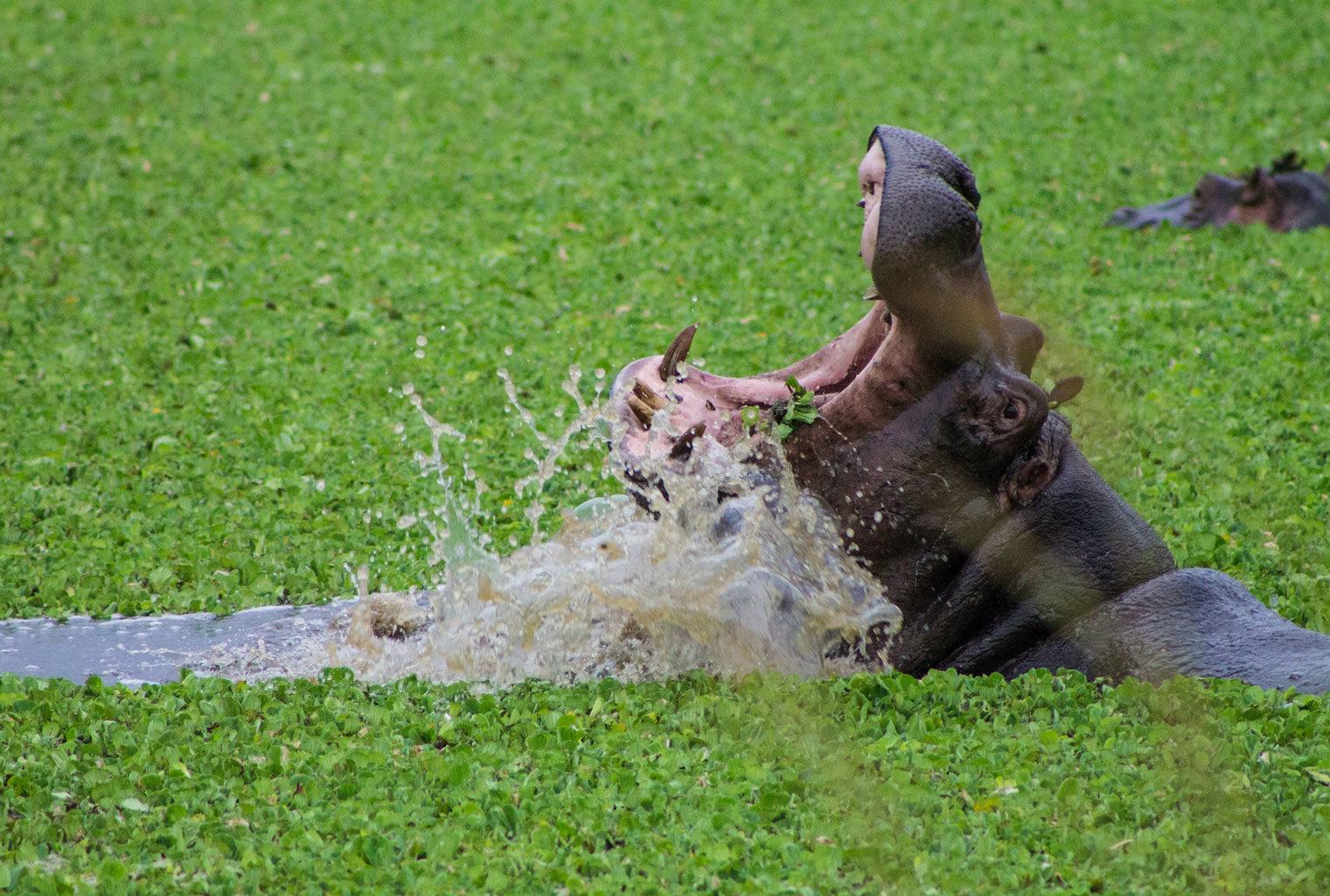 Kenya-House-In-The-Wild-Hippo