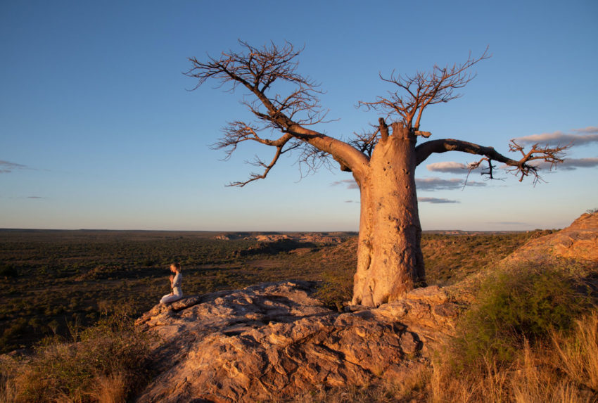 Hannah-Strand-Wellness-in-the-Wild-Baobab