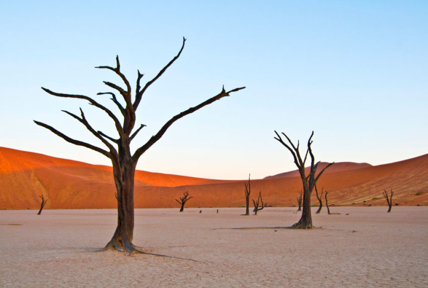 Namibia-Tracks-and-Trails-Dead-Vlei