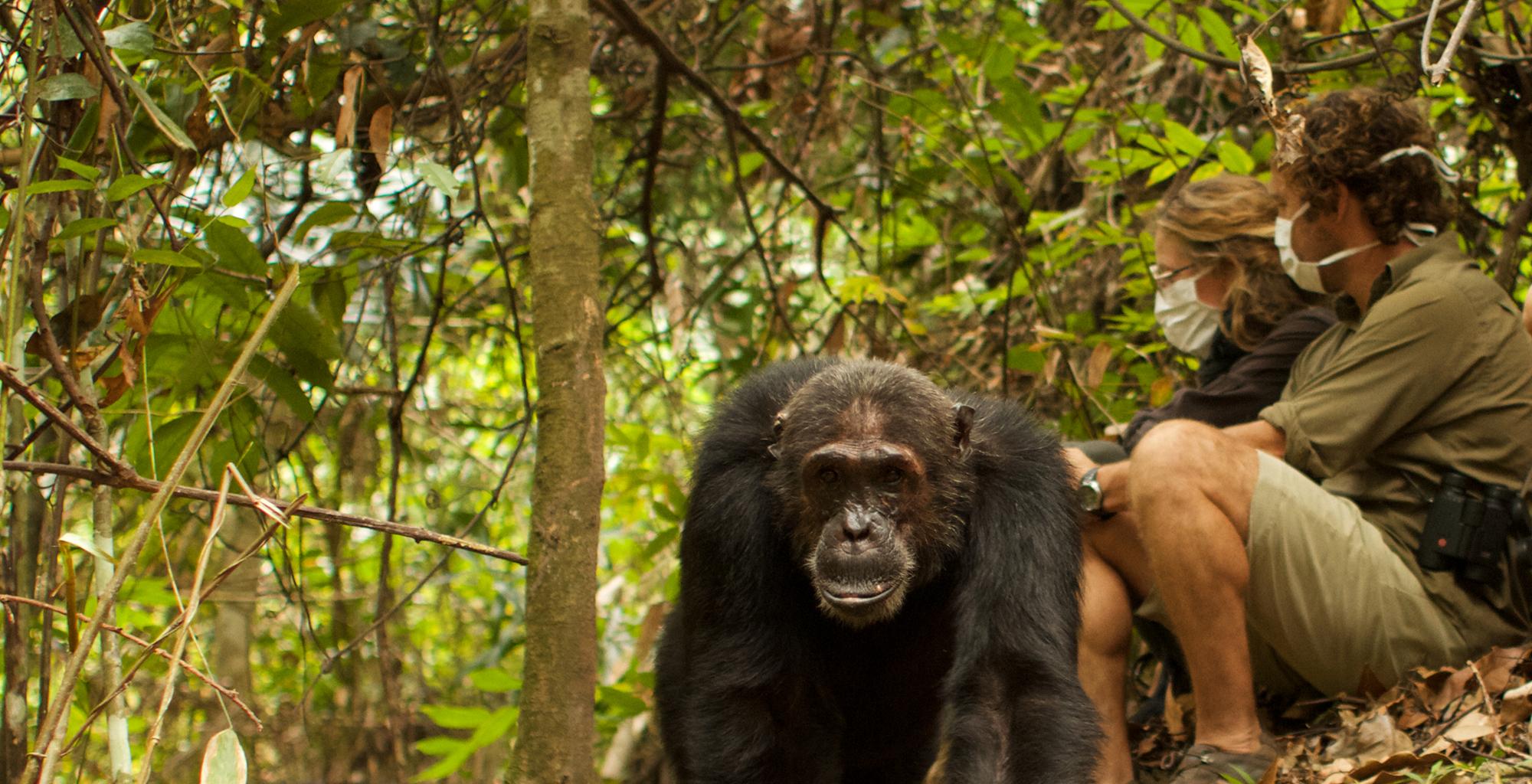 Tanzania-Chimp-Nest-Wildlife-Tracking