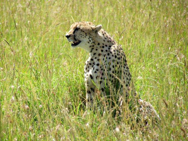 Cheetah Chris Tinkler
