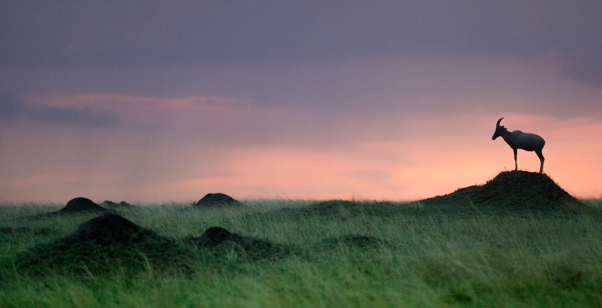 Kenya-Maasai-Mara-Sunset-Wildlife