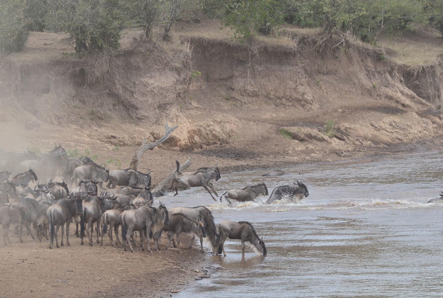Tangulia-Mara-Maasai-Kenya-Wildebeest