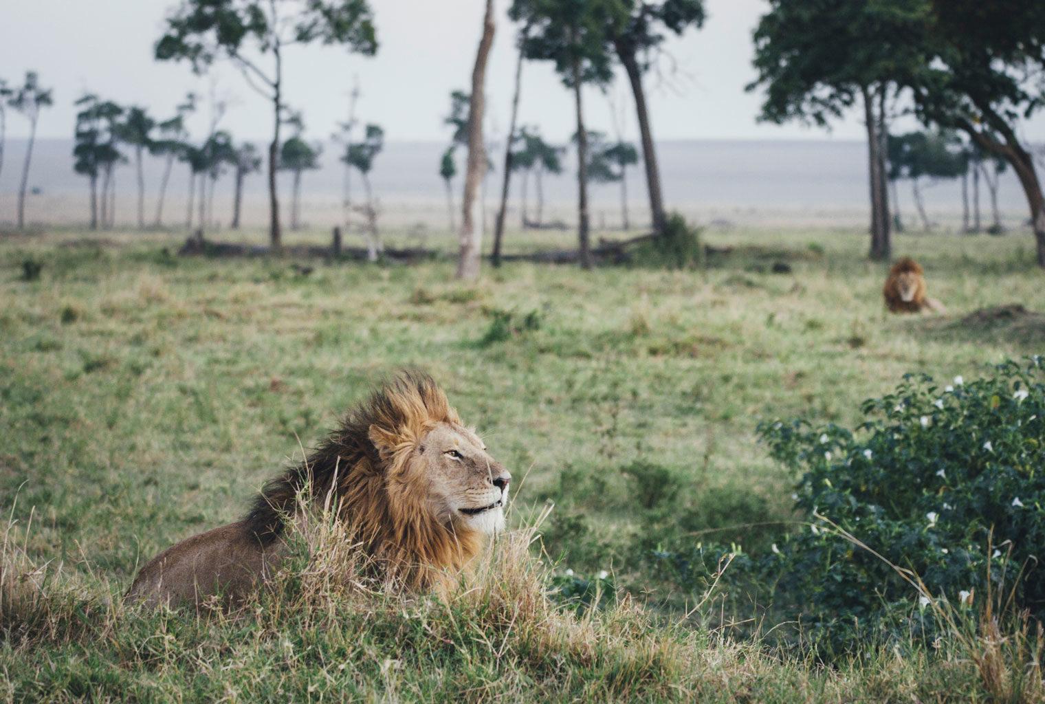 Tangulia-Mara-Maasai-Kenya-Wildlife