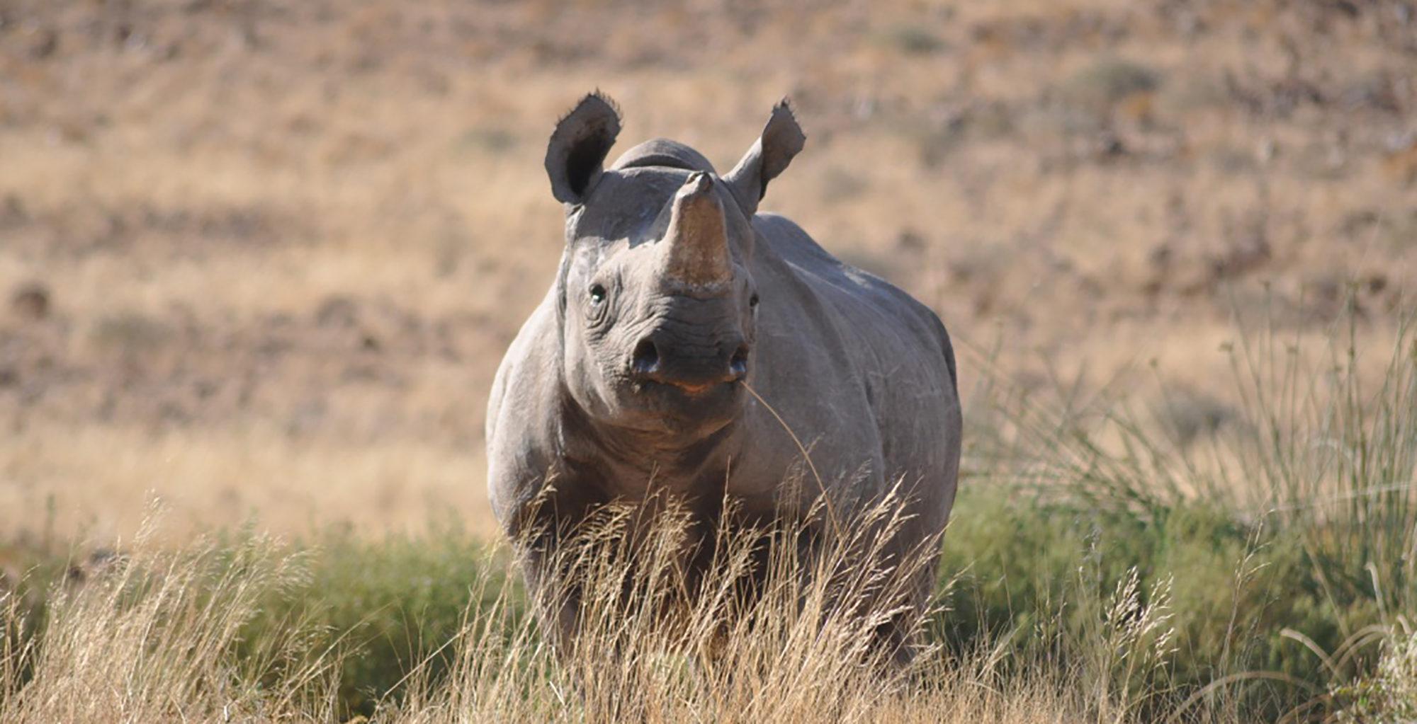 Namibia-Tracks-and-Trails-Etosha-Black-Rhino