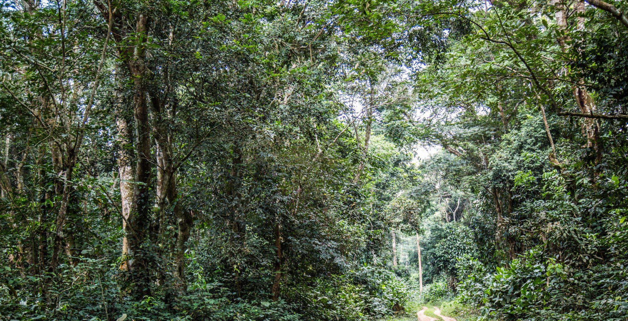 Odzala National Park - Republic of Congo