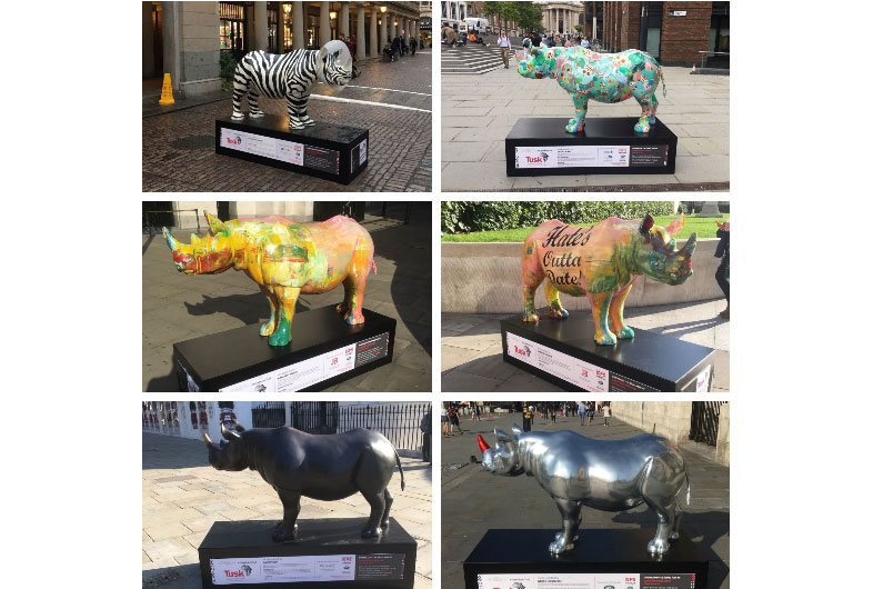Rhino-Trail-London-JbD-Resize