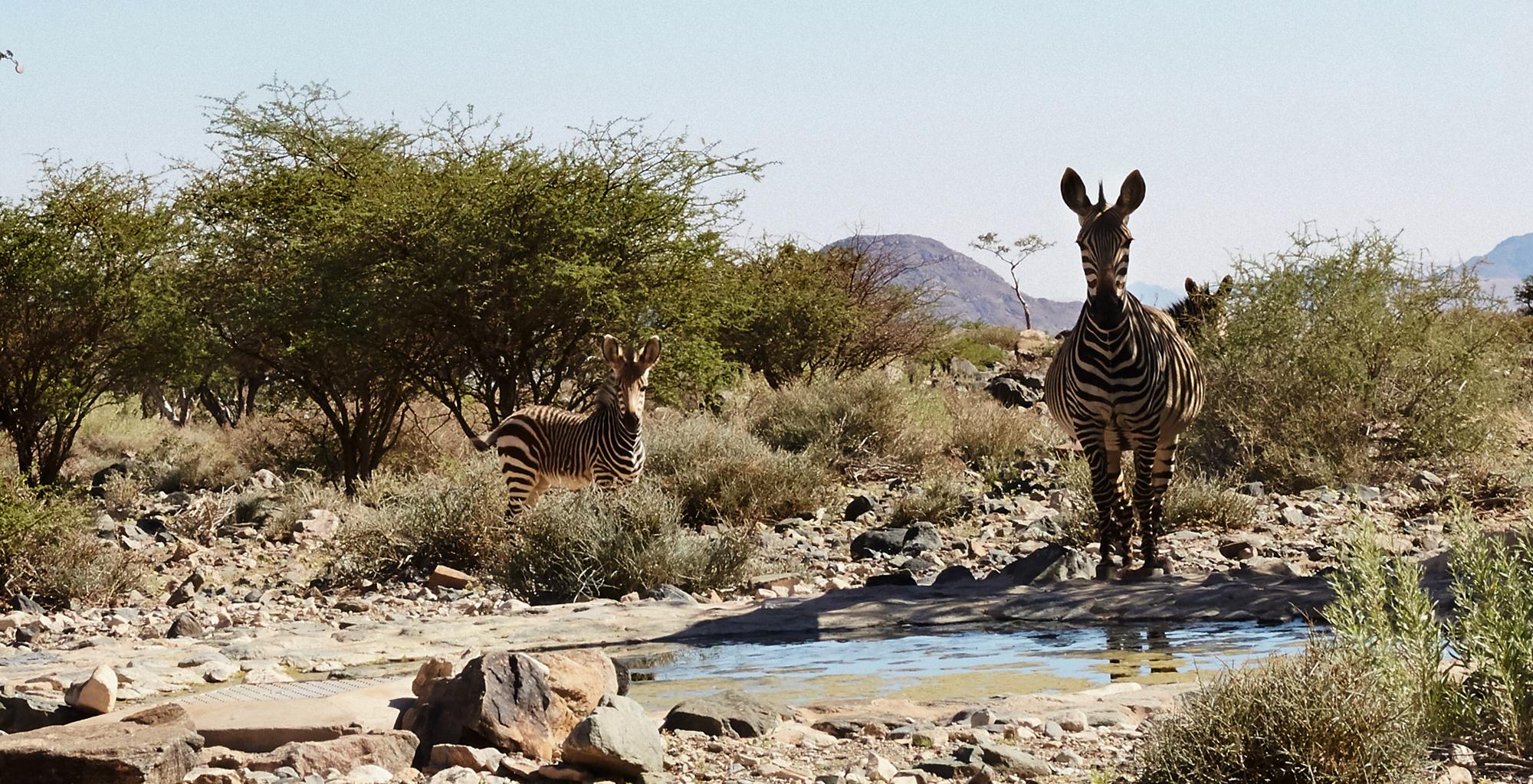 Namibia-Sossusvlei-Nest-Zebra