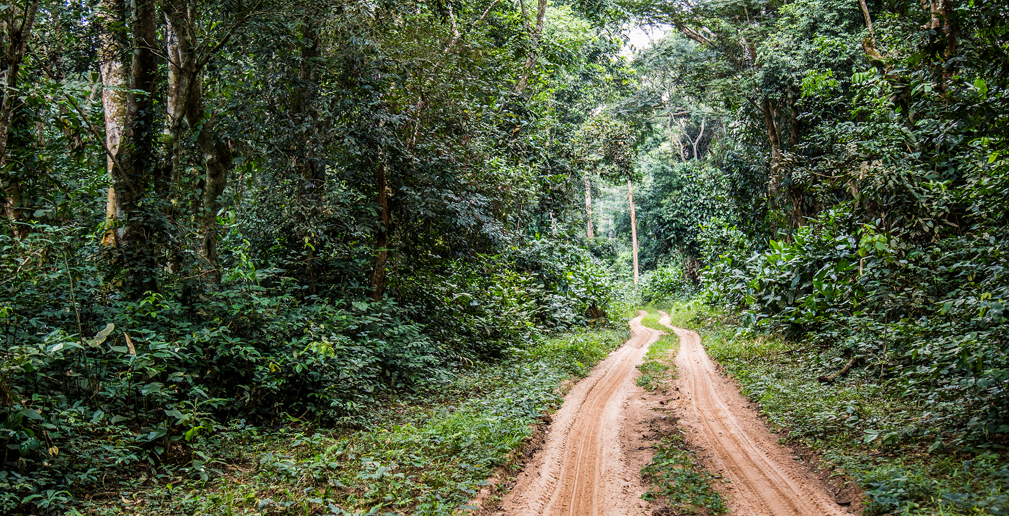 Republic-of-Congo-Odzala-Road