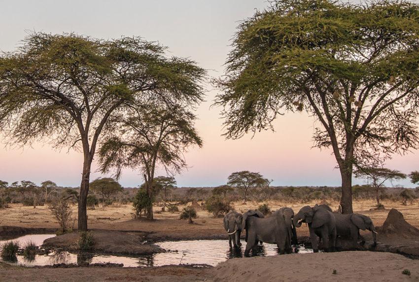 Zimbabwe-andBeyond-Matetsi-River-Lodge-Wildlife-Elephant