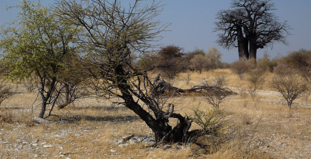 Namibia-Nyae-Nyae-Conservancy