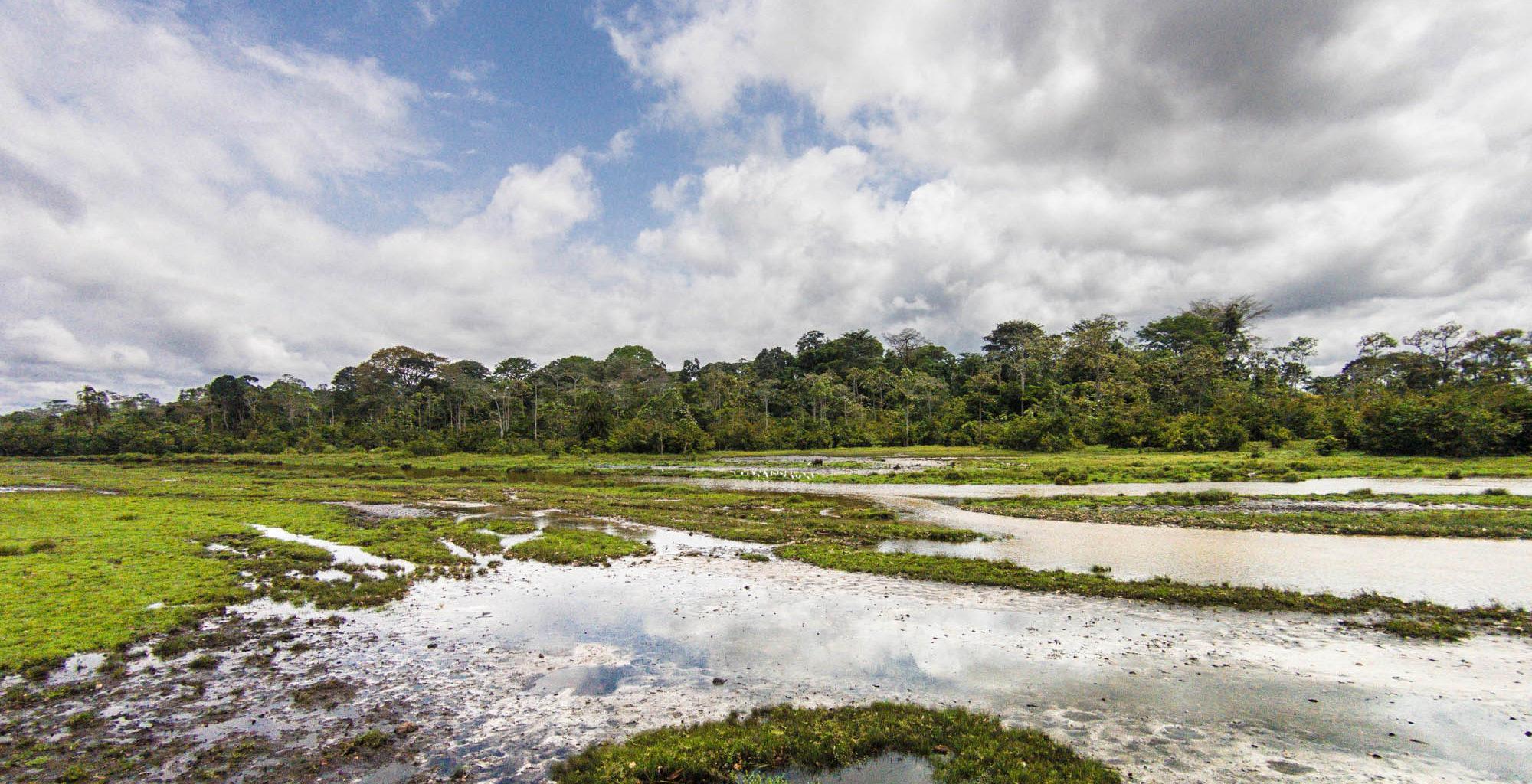 Republic-of-Congo-Odzala-Landscape
