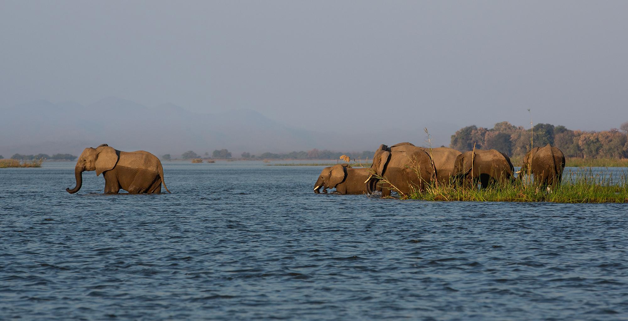 Zimbabwe-Greater-Mana-Expedition-Wildlife-Elephant