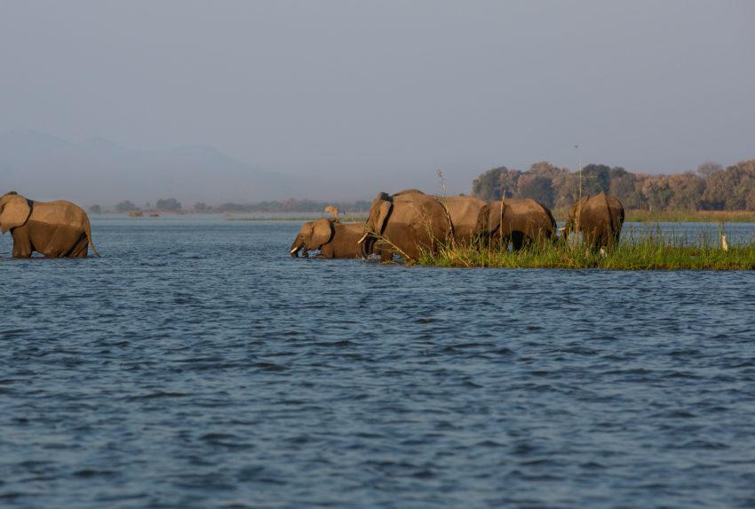 gpzimbabwe-greatermanaexpedition-elephantsinzambezi