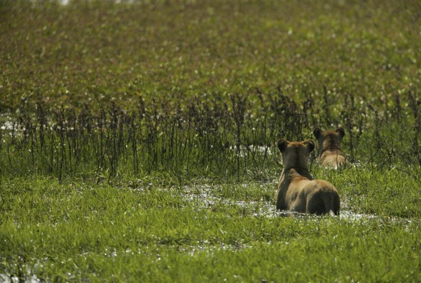 _Copyright_Beverly_Joubert_Duba_Wildlife_Botswana_4020