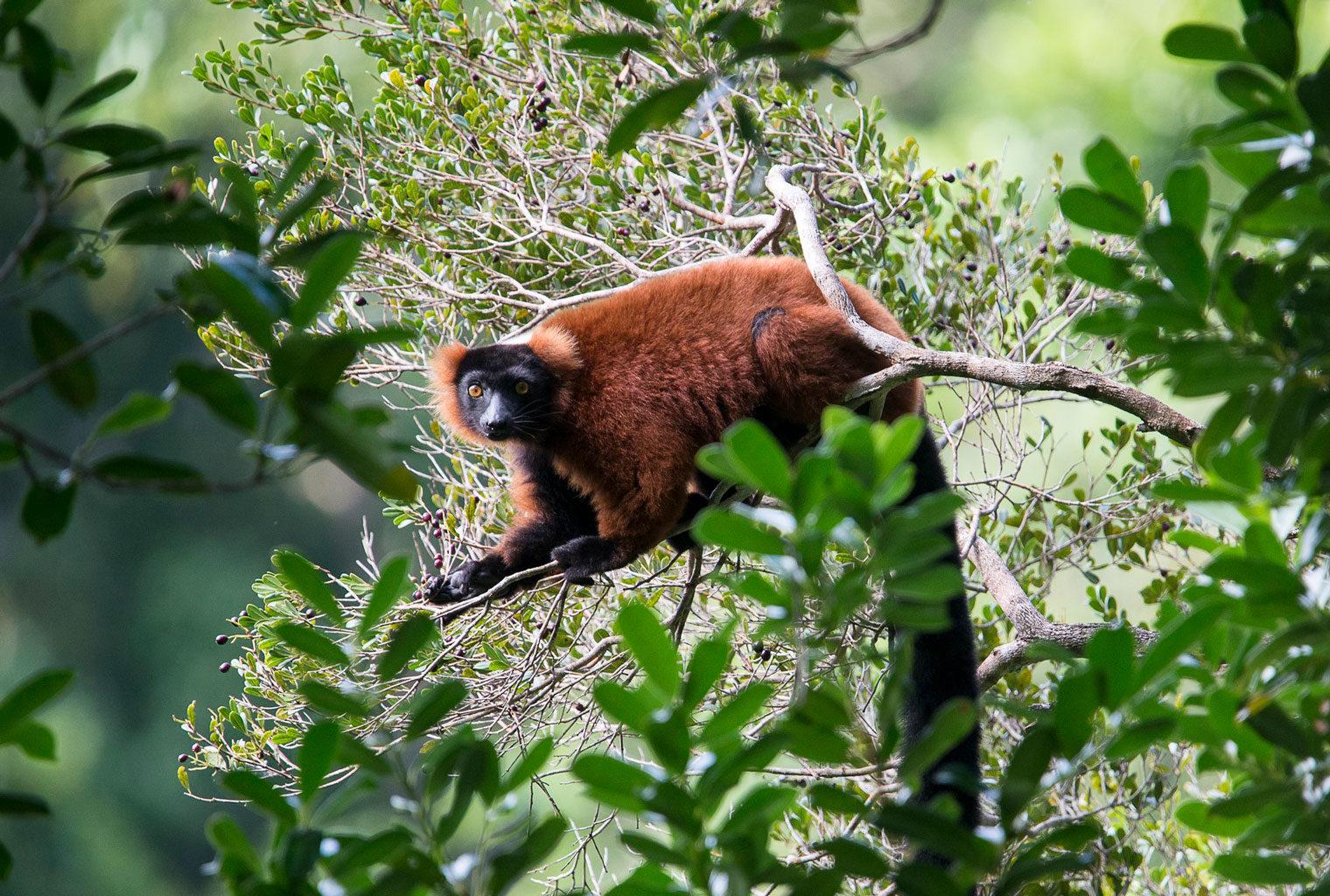Masoala-Forest-Lodge-East-Madagascar-Wildlife