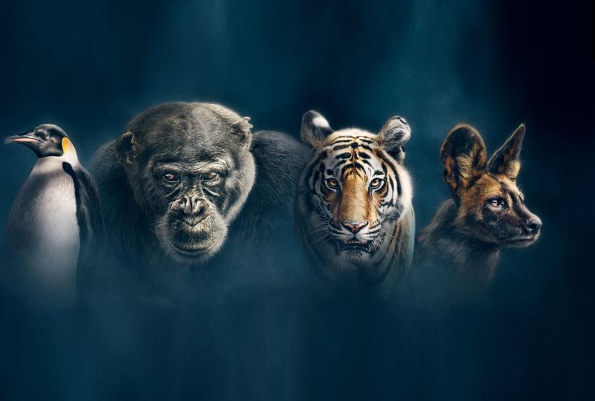 Dynasties David Attenborough
