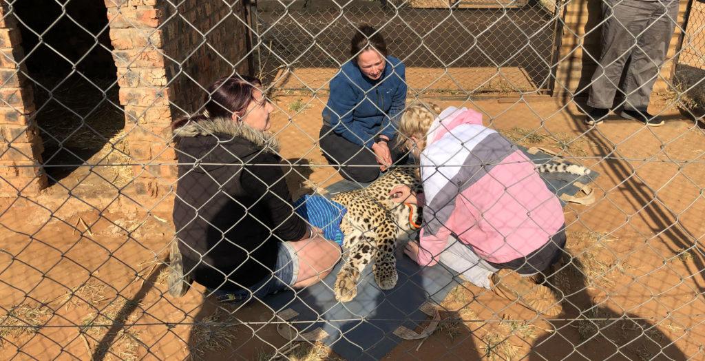 Cheetah Experience Bloemfontain