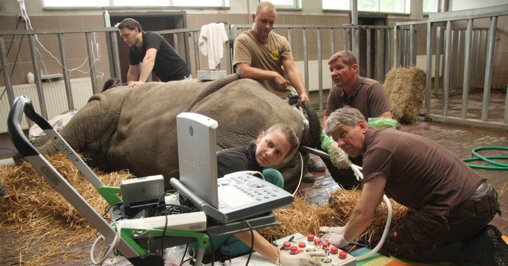 BioRescue-Rhino