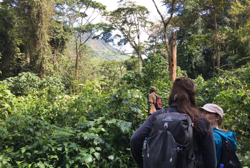 Gorilla Trekking Uganda Fiona Walls