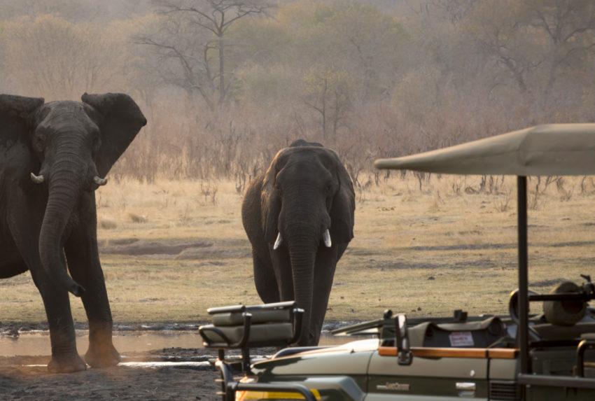 Zimbabwe-Victoria-Falls-Wildlife-Elephant