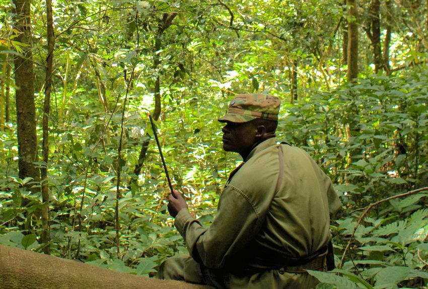 Tongwe-Trust-Ranger-Ntakata-Forest