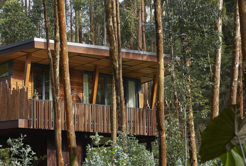 Rwanda-Gorilla's-Nest-Exterior-Trees